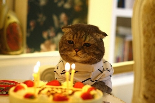 Birthday Cat is not Amused