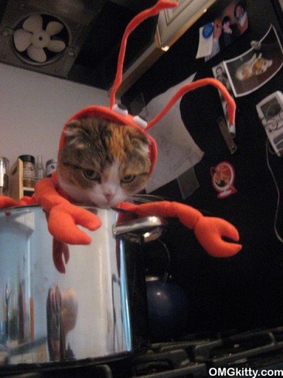 Lobster-Kitty