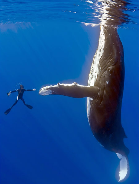 Whale Gives Me High Five