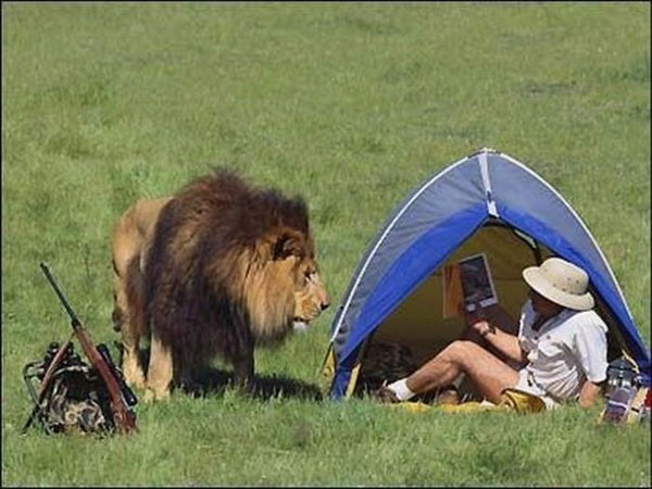 Lion Rifle Tent