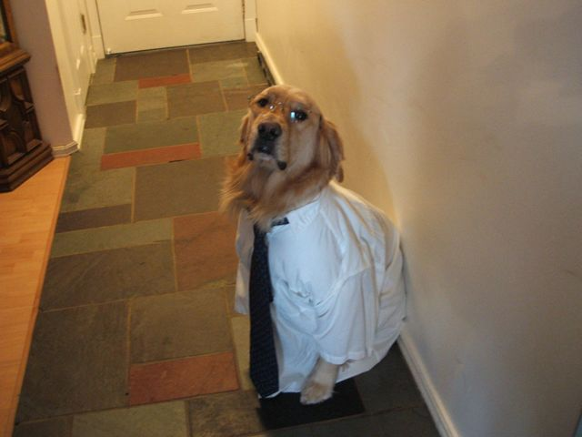 This is my Dog Dressed in Glass, Shirt, and Tie