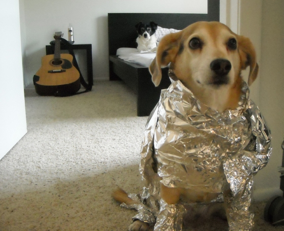 Dog in Foil Says Sorry Babe Nasa Needs Me