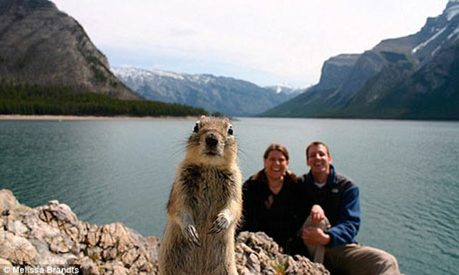 Squirrel Photobombs Marriage Photo