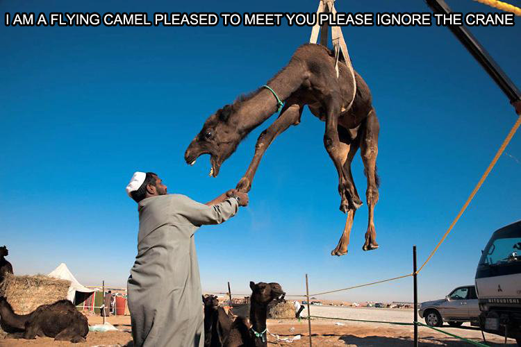 Hello I'm a Flying Camel ignore the crane
