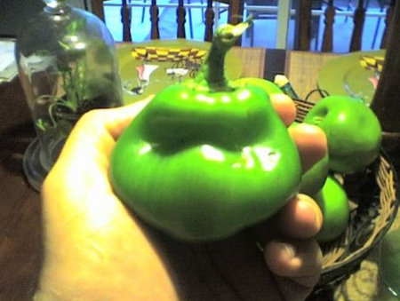 Teenage Mutant Ninja Pepper