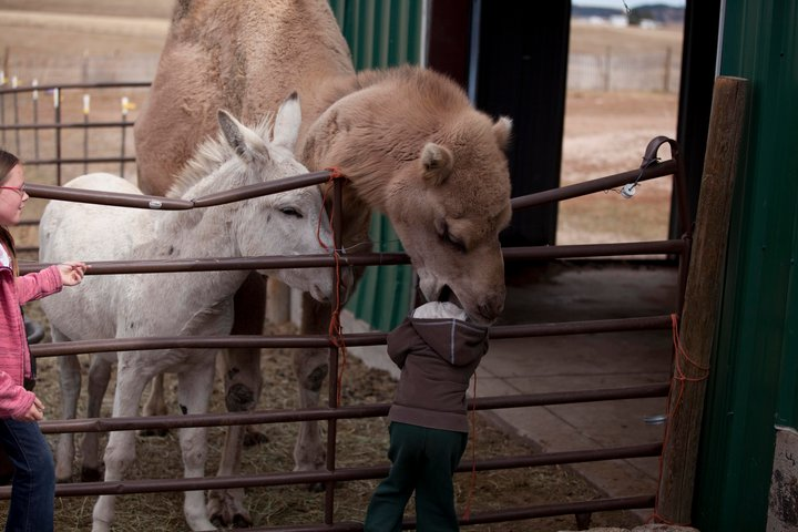kid petting zoo scared of camels