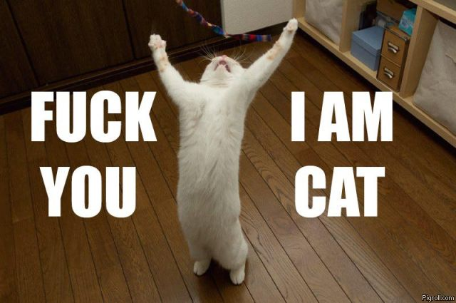 triumphant cat says f you im a cat