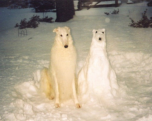 white dog snow man nailed it