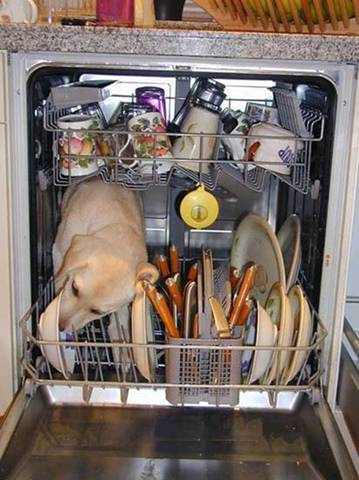 Redneck Dishwasher Dog Licks Plates