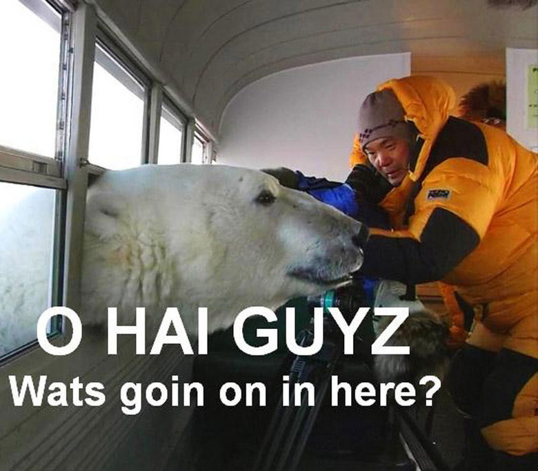 Polar Bear Says hello Hai Guyz