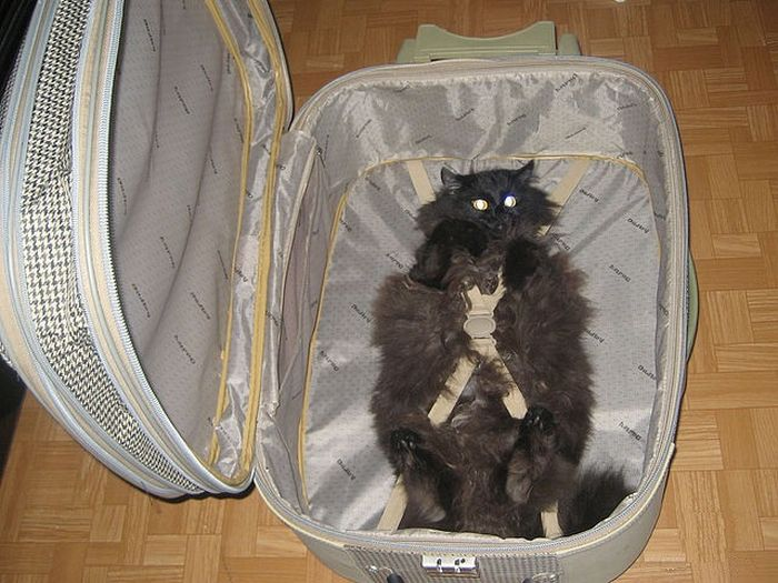 whiskers escape plan ready for trip