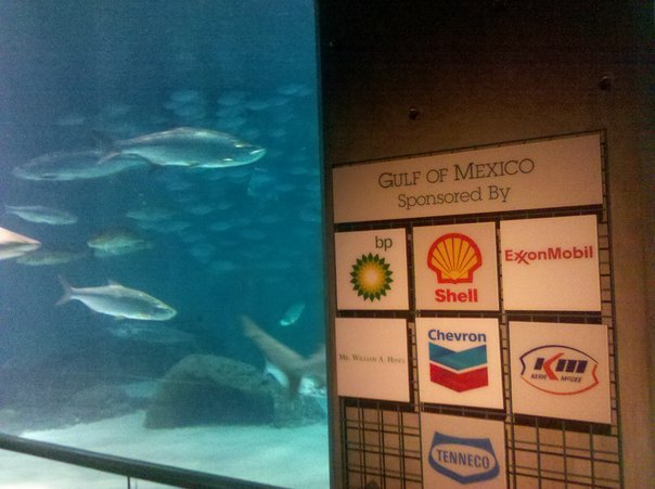 gulf of mexico sponsored by bp