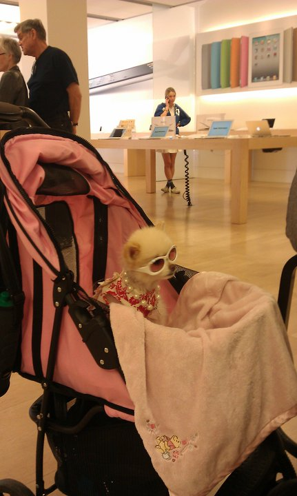meanwhile at the apple store